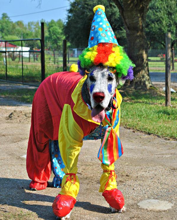 clowndog 1